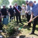 Un rosier a été planté ce matin en mémoire de Noëlle Boudart