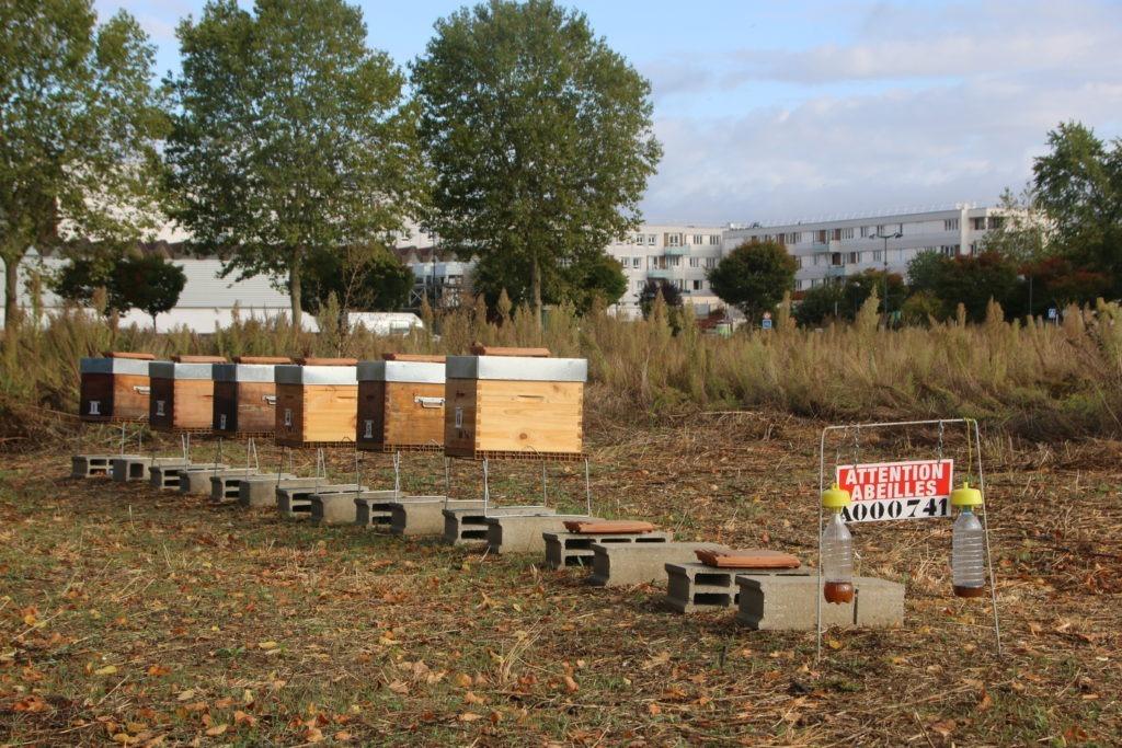 Six ruches viennent d'être installées parmi les moutons sur l'Ilot 14