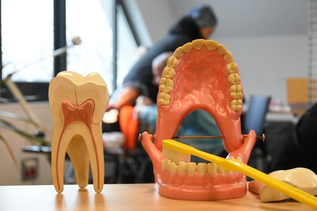 Les dents, c'est important !
