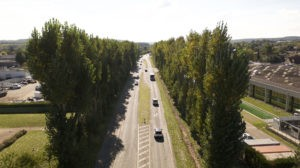 Les peupliers, malades pour la plupart, seront place bientôt à 386 nouveaux arbres de 19 essences différentes