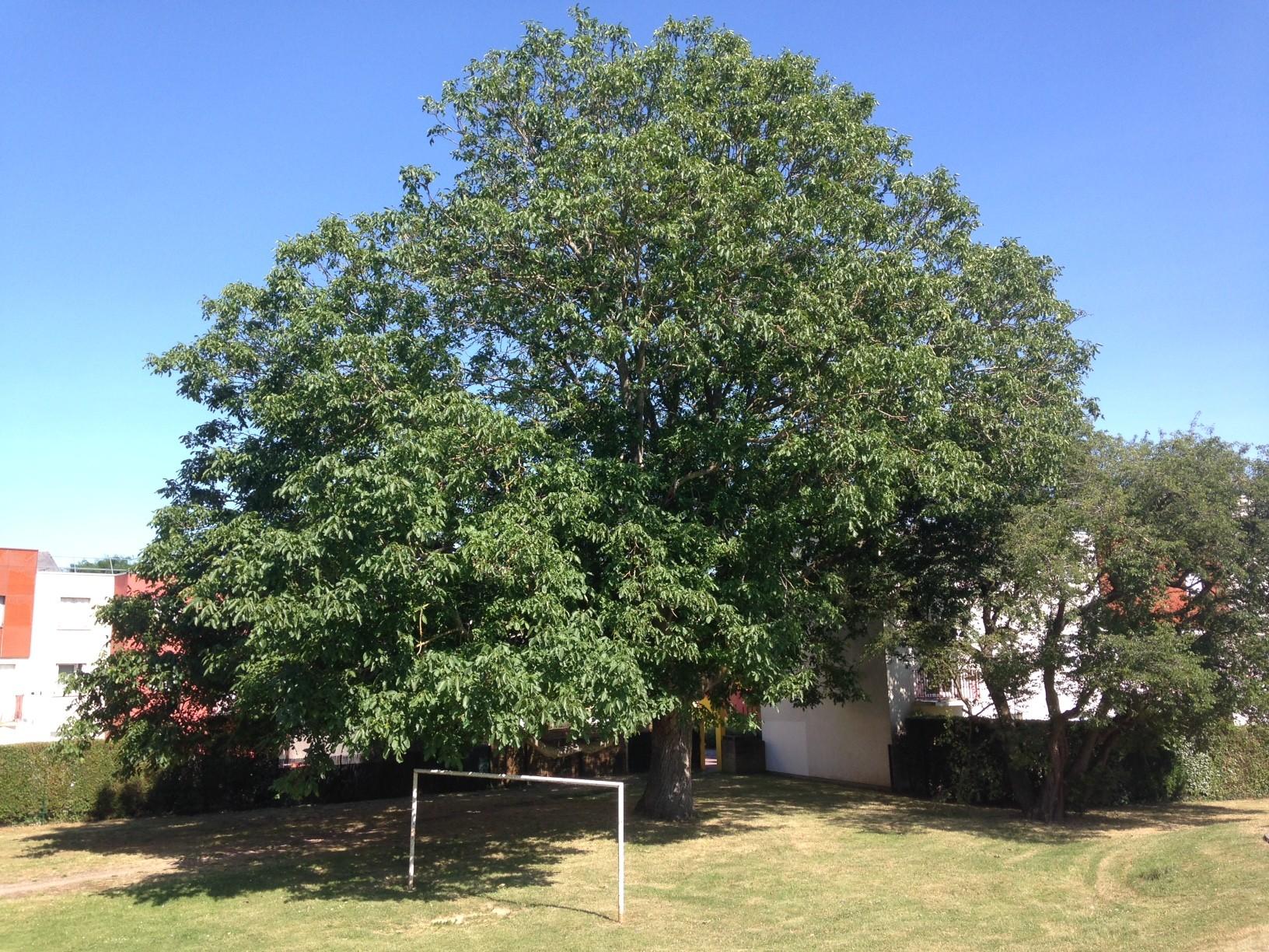 Concours photos du plus bel arbre