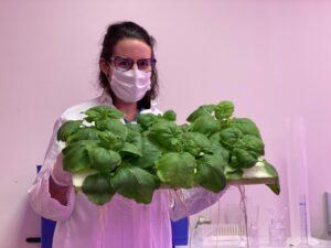 Des anticorps produits à partir d'une plante dans laquelle a été introduit un gêne particulier.