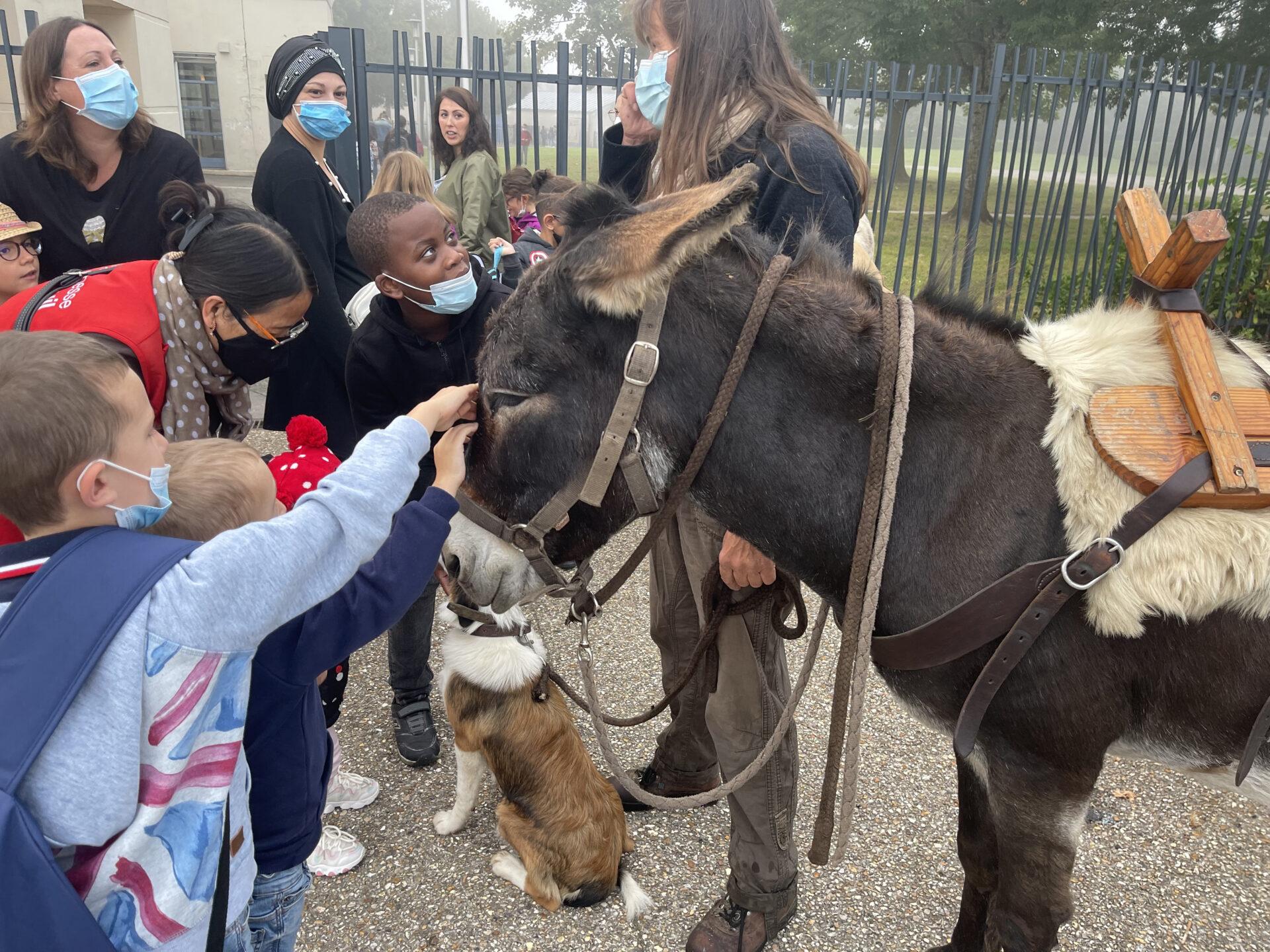 Mois du développement durable : À dos d'âne avec l'ASINOBUS